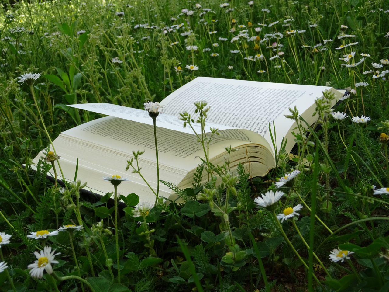 Kinder- und Jugendbücher - dieses liegt auf einer Blumenwiese.