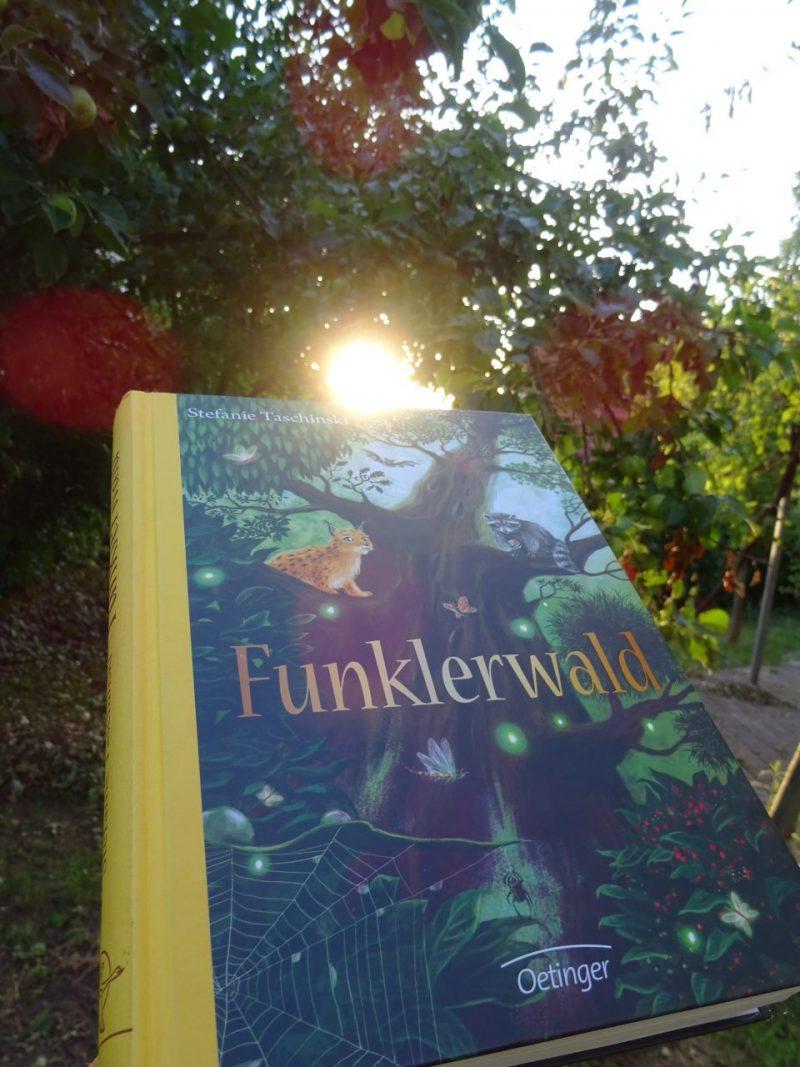 """""""Funklerwald"""" wird von der Abendsonne beleuchtet."""